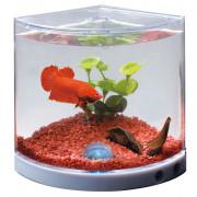 Akvárium Betta tank